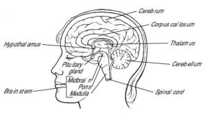 Body.Brain3