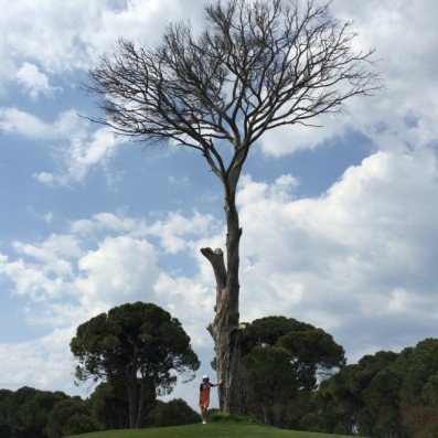 Spectacular tree on 7th on Dunes.